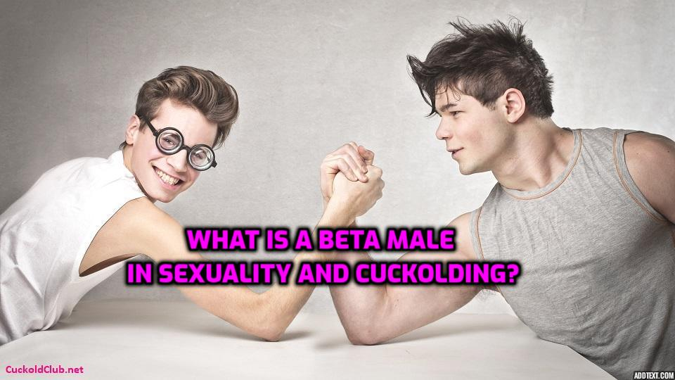 What is a Beta Male in Sexuality and Cuckolding?